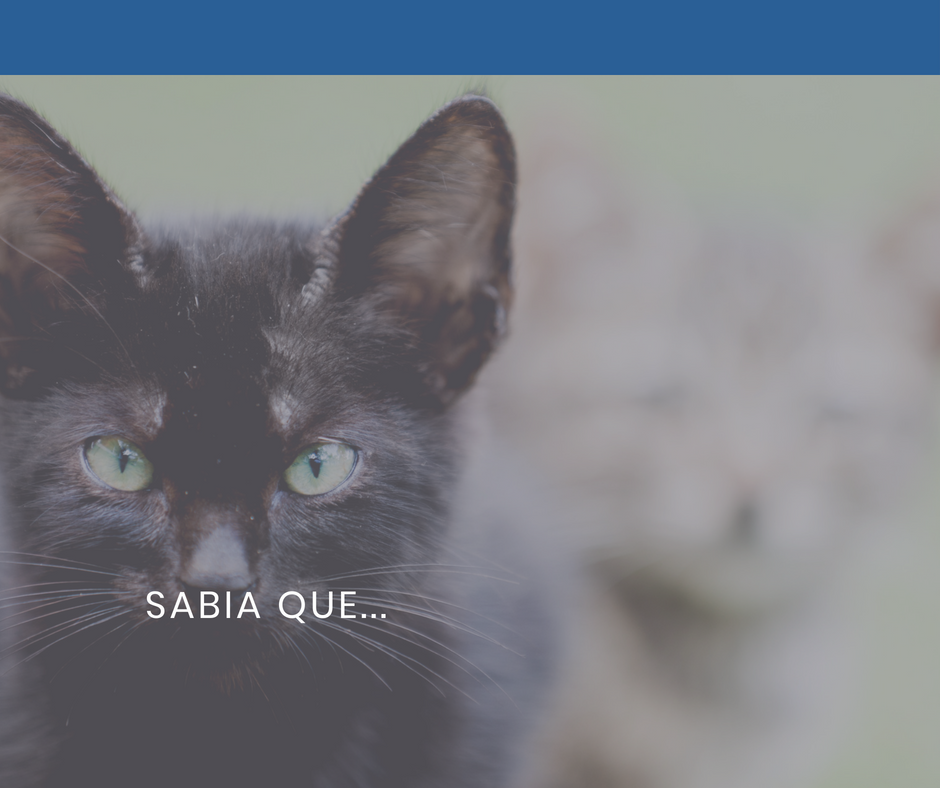 sabia que hipertiroidismo felino